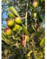 Huile d'olive filtrée -3L